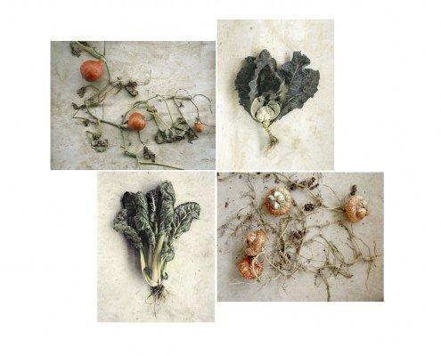 Jacqueline Salmon_La racine des légumes Tirage numéroté et signé par Jacqueline Salmon à choisir parmi trois photographies. Format 21 x 26 cm sur papier Arches Velin Museum Rag 250g, Canson. Édition limitée à 30 exemplaires