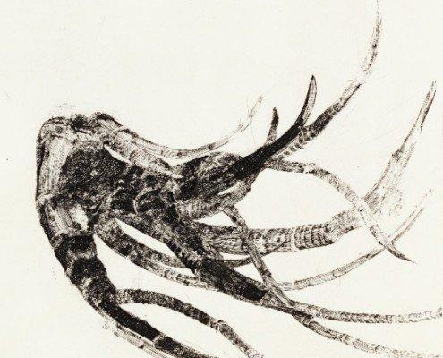 Maria Chillon, Au bout des doigts n°5 (détail), 2015, burin, 60x50cm ©Maria Chillon-Galerie Schumm-Braunstein-Editions GSB